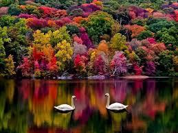 Naturfärger